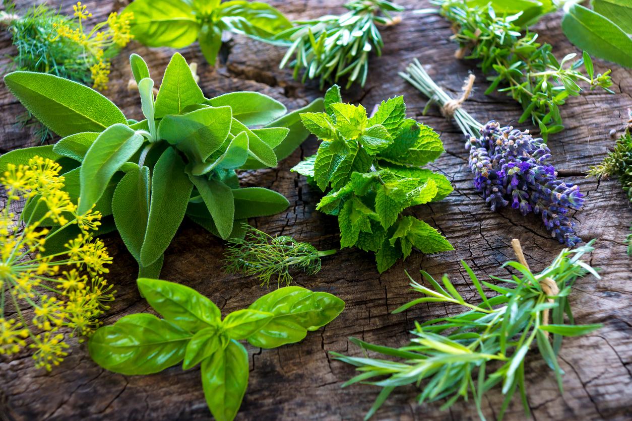 Plantas com ação anti-inflamatória